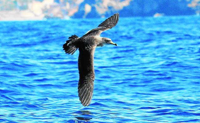 La observación de las aves mejora la salud