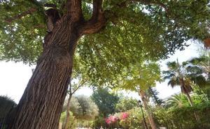 El catálogo de ejemplares monumentales protege más de un centenar de árboles