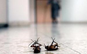 Evita las plagas de cucarachas en casa con estos simples remedios