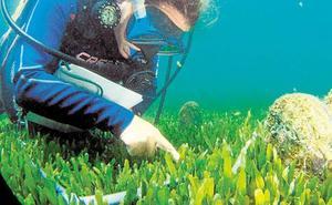 Fondeos ecológicos en las islas del Mar Menor para salvar las nacras