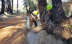 El palmeral de Santiago y Zaraíche recupera el riego tradicional