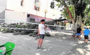 Susto en el principal parque de San Ginés de Cartagena al caer una rama