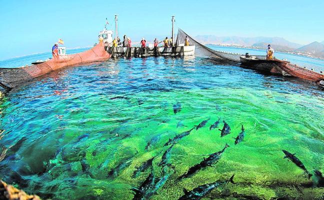 Una ruta ambiental difundirá los valores de Cabo Tiñoso