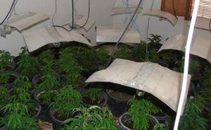 Desmantelan un invernadero clandestino de marihuana en Bullas