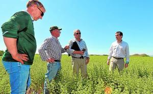 La Paca es la primera productora regional de plantas aromáticas