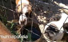 Rescatan a más de un centenar de animales en pésimas condiciones en Javalí Nuevo