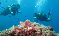 Cabo Tiñoso se convierte en la segunda reserva marina de la Región