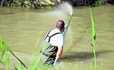 La mosca negra sobrevuela el río Segura