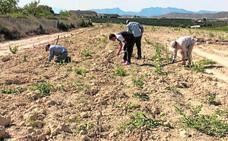 En busca de una agricultura sostenible y rentable