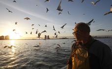 Los pescadores del Mar Menor advierten que si la producción de dorada desciende estarán «muertos»