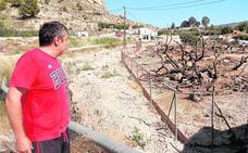 Cooperativas y productores de albaricoque se unen para exigir medidas que relancen el cultivo