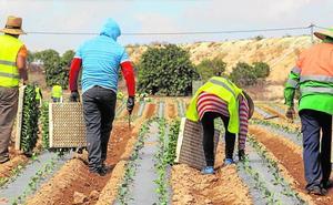 Camposeven, ejemplo de salud y calidad hortofrutícola en la Región