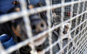 La Guardia Civil inmoviliza 191 perros de un centro canino de Madrid