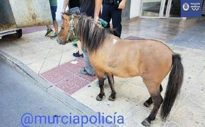 Más perdido que un poni en un garaje de Murcia