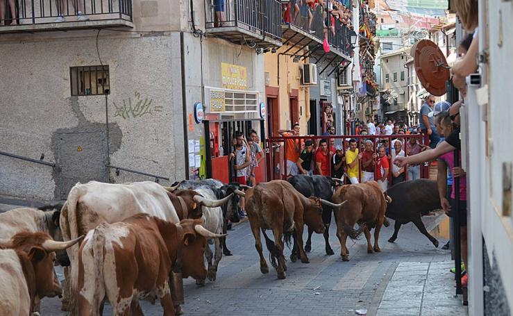 Las vacas de Miura dejan un último encierro limpio en Moratalla