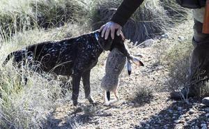 Declaran la emergencia cinegética por una plaga de conejos en diez municipios de la Región
