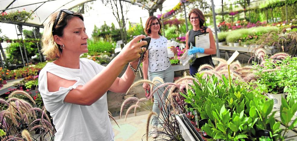 La Consejería inspeccionará este año 9.000 hectáreas buscando 'Xylella fastidiosa'