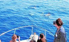 Navegar entre delfines y ballenas
