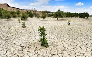 Asaja: «Uno de cada 5 agricultores ha visto mermadas gravemente sus rentas por la falta de agua»