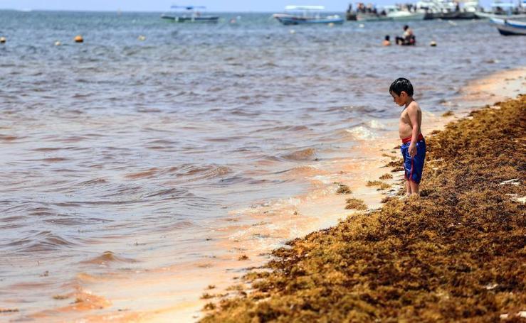 Un alga fétida toma la Riviera Maya