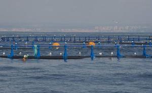 La ampliación del polígono acuícola de San Pedro creará 130 nuevos empleos