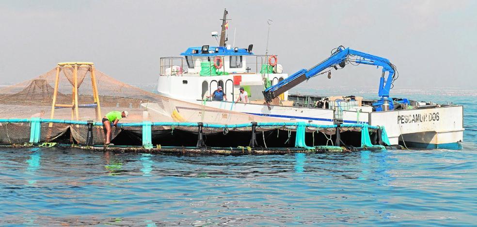 La ampliación del polígono acuícola triplicará la cría de lubina, dorada y atún