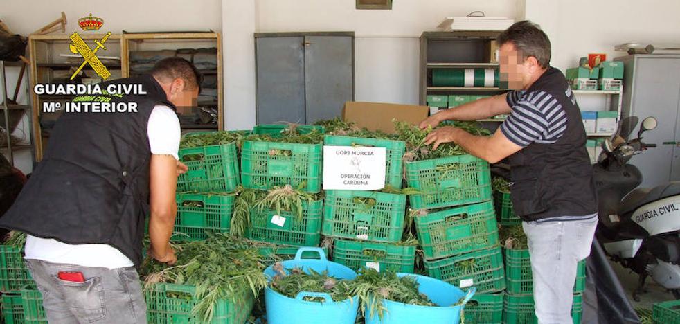 Unos invernaderos ocultaban hasta 9.000 plantas de 'maría', un alijo valorado en 45.000 euros