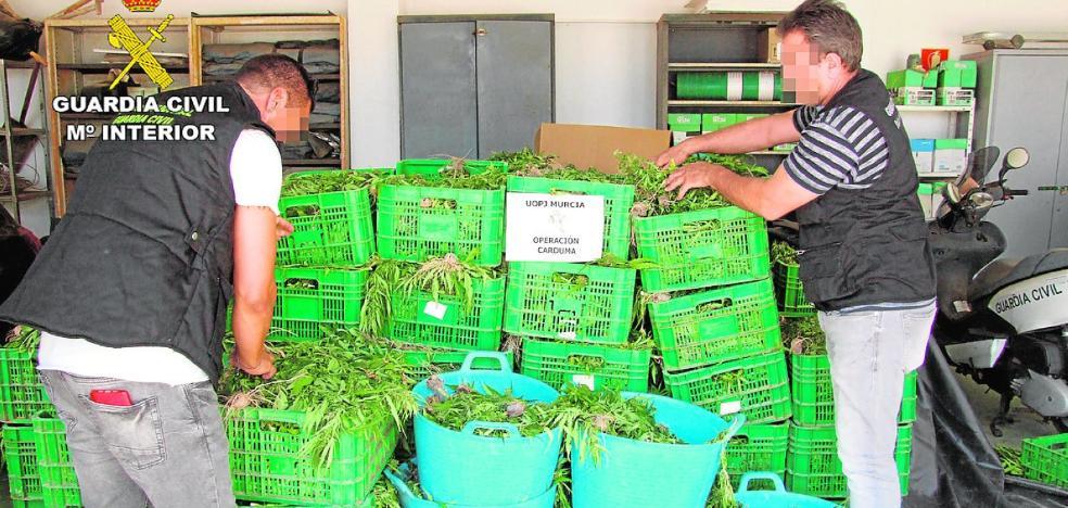 Un vecino de Jumilla lideraba la red de las 9.000 plantas de 'maría' decomisadas en dos invernaderos