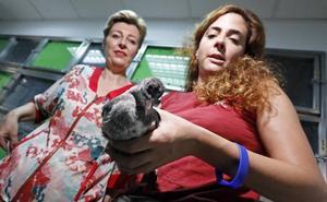 Recuperan más de 500 animales en El Valle desde el inicio del año