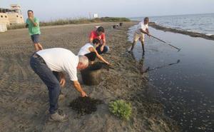 El fartet se abre paso en Punta Brava