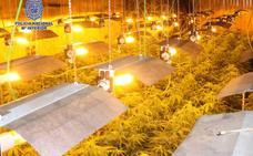 Desmantelan una plantación de marihuana en un chalé de La Alcayna