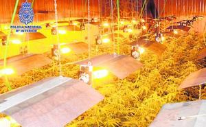 La Policía descubre más de 800 plantas de marihuana en un chalé de La Alcayna