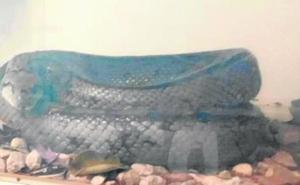 Policías locales atrapan en pleno casco urbano una serpiente de metro y medio de longitud