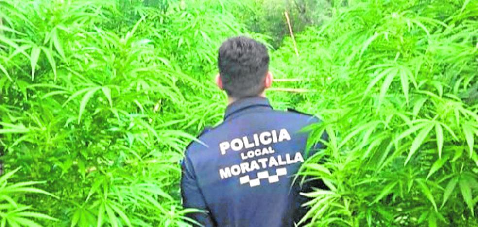 Intervienen 50 kilos de marihuana en un paraje escarpado de Moratalla