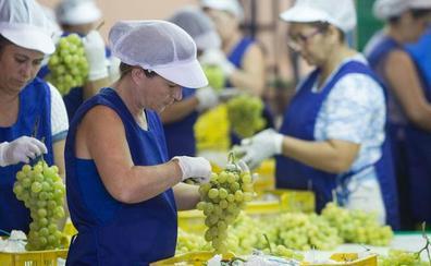 La Región se convierte en la principal productora y exportadora de uva de mesa de España