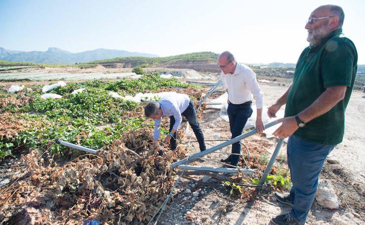 Casi un millón de pérdidas en Aledo por los daños del granizo en los parrales