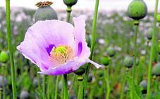 El granero de opio