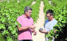 Viticultores y bodegueros prevén una cosecha «excelente», con un 15% más de producción