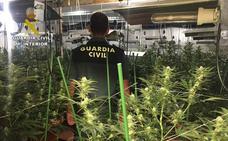 Desmantelan un invernadero con más de un centenar de plantas de marihuana en Lorquí