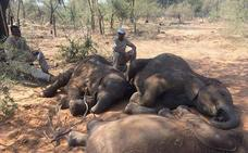 Matanza animal en Botsuana: 100 elefantes muertos a manos de cazadores furtivos