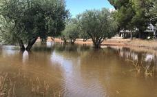 Las fuertes lluvias de hasta 60 litros por m² hacen peligrar los cultivos en Yecla