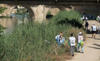 Aprueban una iniciativa para limpiar las especies vegetales invasoras del río Segura