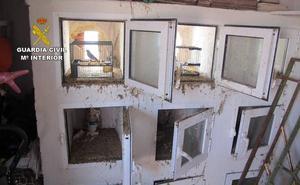 Detenido por la captura ilegal de jilgueros en Cartagena
