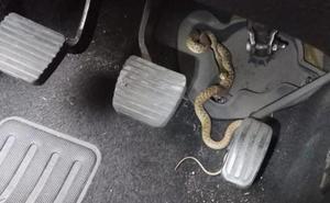 Se tira de su vehículo en marcha tras descubrir una serpiente entre los pedales