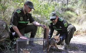 La Brigada de Delitos Ambientales abre 30 investigaciones en lo que va de año