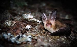 Los murciélagos no son tan malos