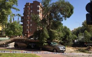 Cae un árbol de grandes dimensiones sobre dos coches en el Infante