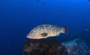 Un estudio de la UE constata la buena gestión de la reserva marina de las Islas Hormigas