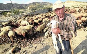 «Las ovejas estaban echando espuma y sangre por la boca»