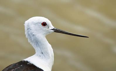 Diez planes para el Día Mundial de las Aves